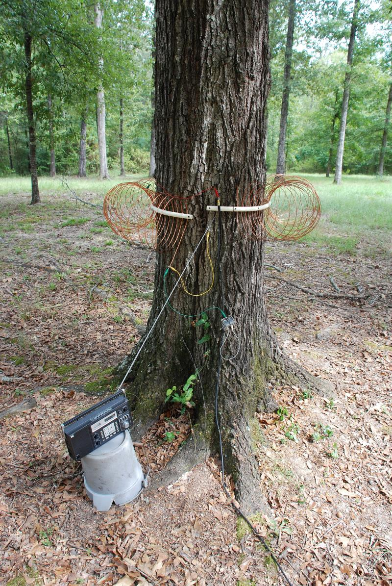 A Tree Antenna For The 600 Meter Band